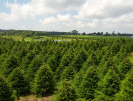 Tree farm in Erie, PA.